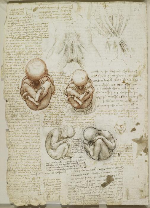Редкие анатомические рисунки Леонардо да Винчи.
