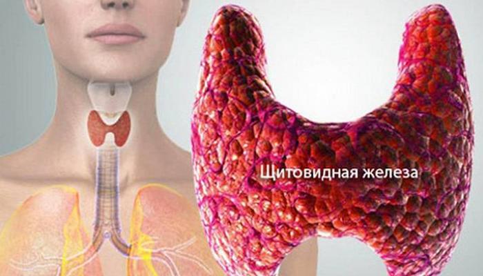 Очищаем щитовидную железу