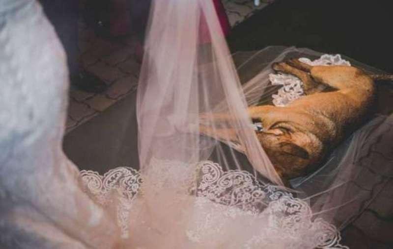 Во время свадьбы в храм зашла бродячая собака и улеглась на фату, но это было лишь начало курьеза