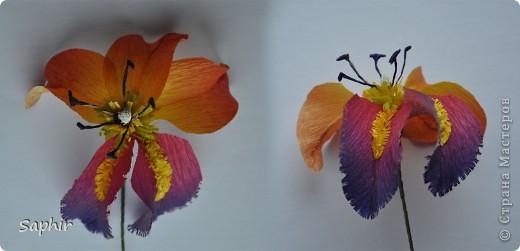 Поделка изделие Бумагопластика цветы из гофробумаги  мастер-класс Бумага гофрированная фото 8