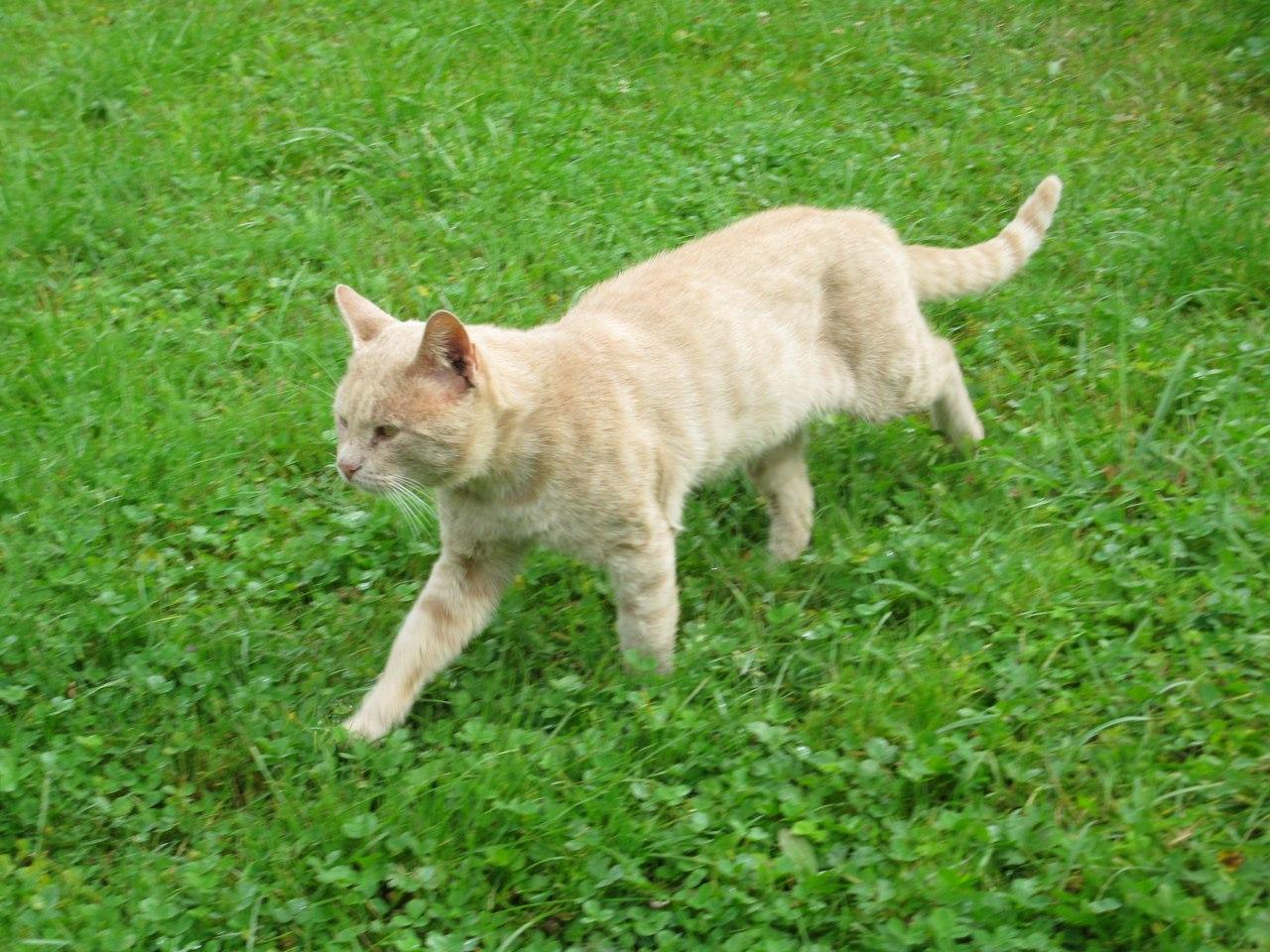 Люди кормили рыжего кота, покрытого шрамами… А его недавний поступок тронул их до слёз!