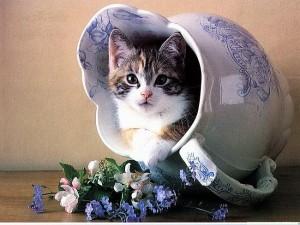 http://mtdata.ru/u16/photo094D/20814565462-0/pad.jpg