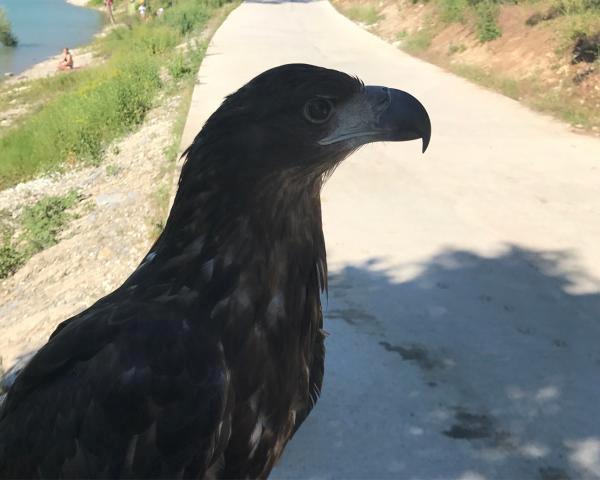 Редкую краснокнижную птицу содержал в неволе и эксплуатировал фотограф-мучитель на Кубани