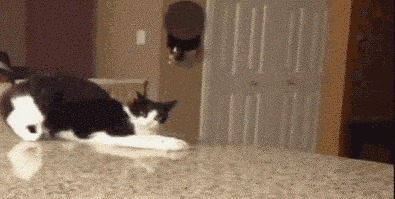 кот, реакция, юмор