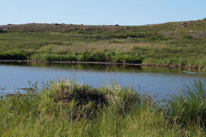 только отошли от станции и увидели олененка(в центре озёра на противоположном берегу) Полярный Урал, горные реки, горы, пейзаж, путешествие