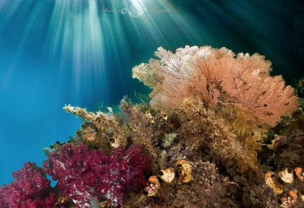 Яркий мир коралловых рифов (20 фото)