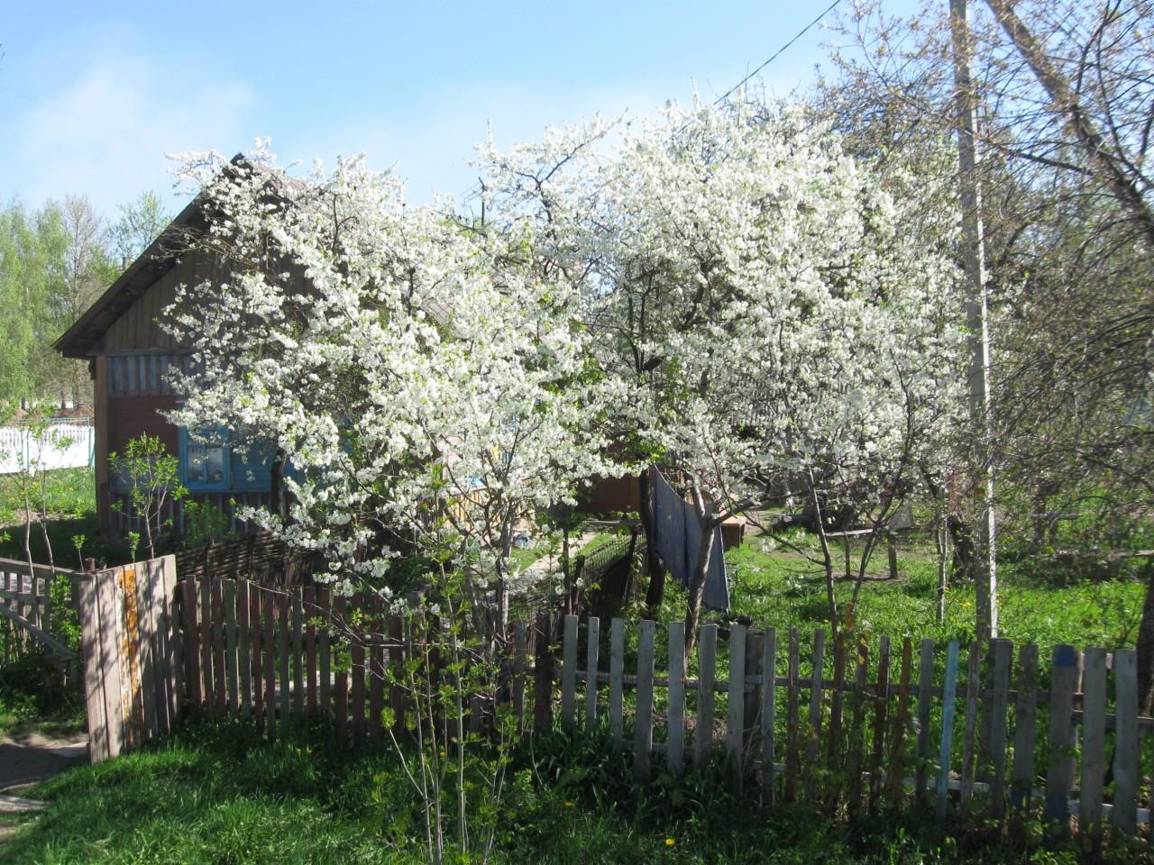 Мгновения нашей жизни: эта цветущая весна
