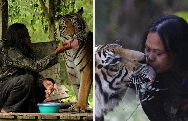 10 лет индонезийская учительница живет с тигрицей