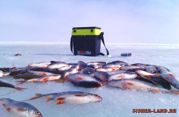 рыбалка с палаткой в псковской области