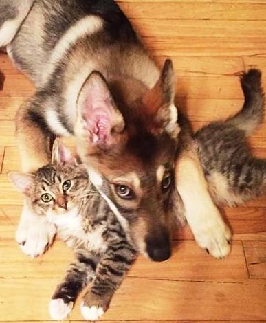 История про то, как собака себе кота выбрала — хозяйка хотела, чтобы пес выбрал себе друга сам...