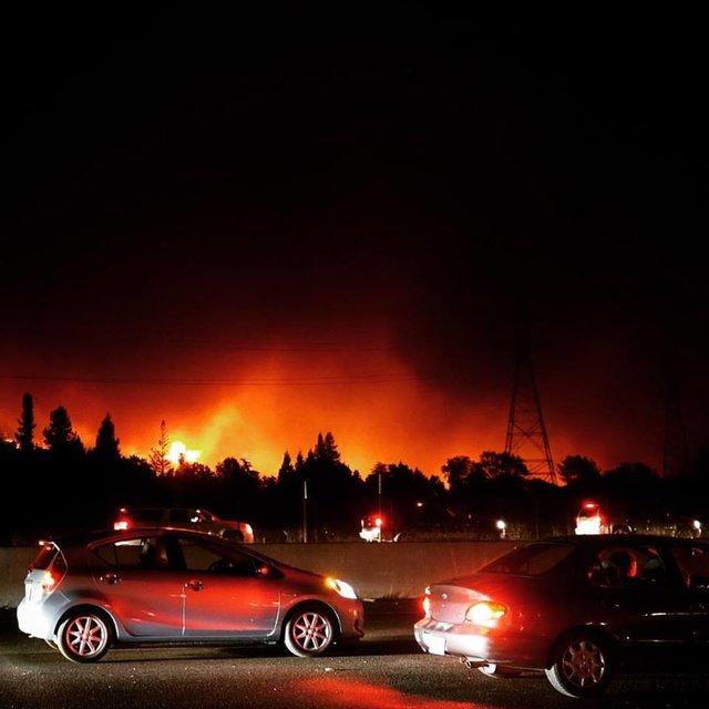 Лесной пожар подбирался все ближе… Но девушке огонь не помешал спасти жизнь своему псу Бентли
