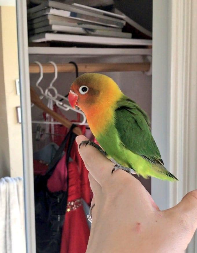 Яркий попугай завёл себе готичную подружку, и их детишки оказались даже прелестнее обоих родителей