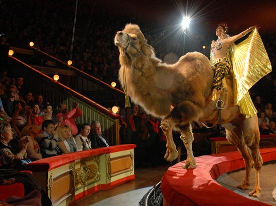 Детям могут запретить посещение цирков