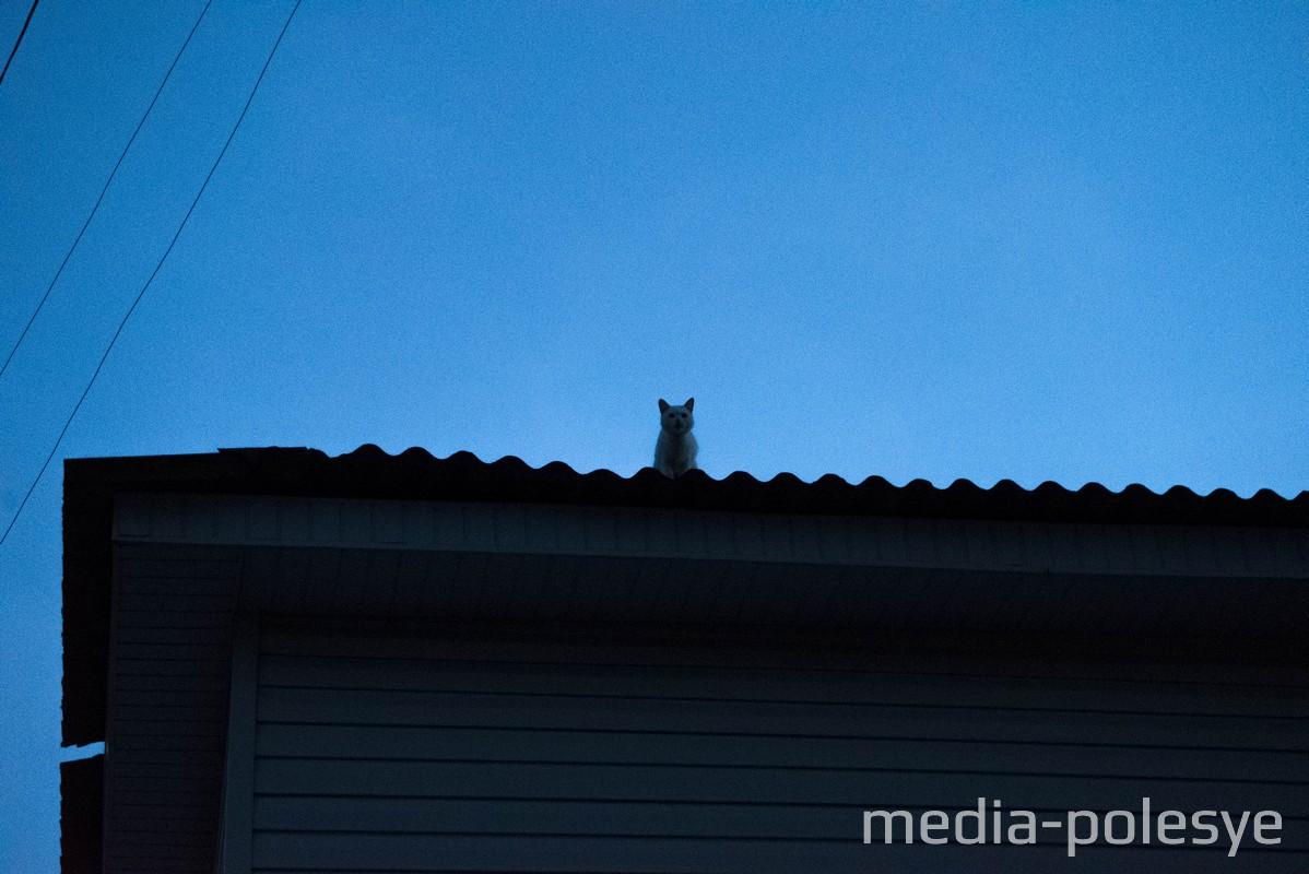 Как лунинецкие спасатели пришли на помощь коту