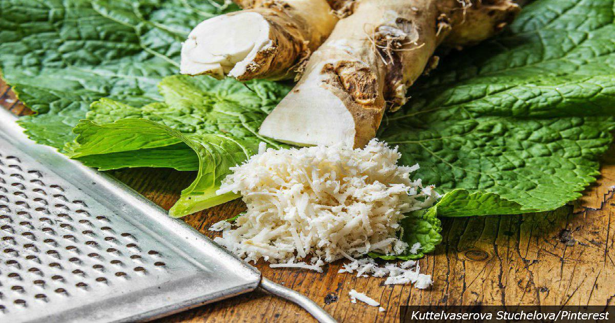 Хрен – единственное растение, способное поглощать соль из организма! Вот почему это важно