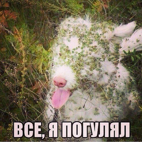 http://mtdata.ru/u16/photo1167/20768415715-0/original.jpg