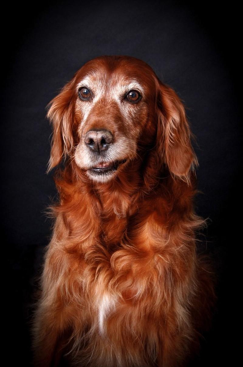 """3 место в категории """"Старички"""" - Трейси Кирби, Ирландия Кеннел клаб, животные, конкурс, лондон, портрет, собаки, фото, фотография года"""