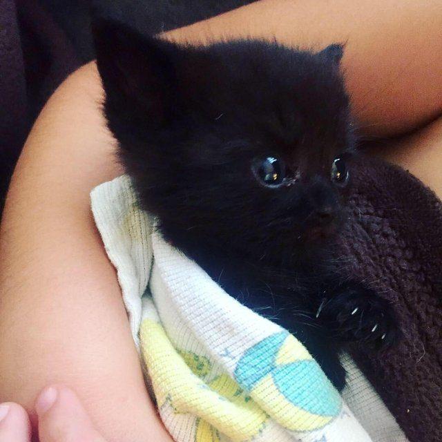 25 самых милых животных, кот…