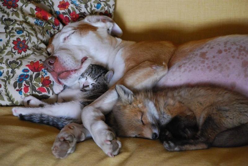 Прекрасные Спящие Животные