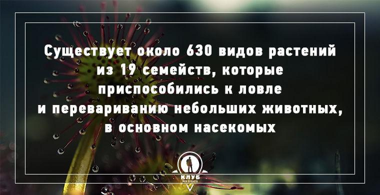 9 фактов о плотоядных растениях(9 фото)