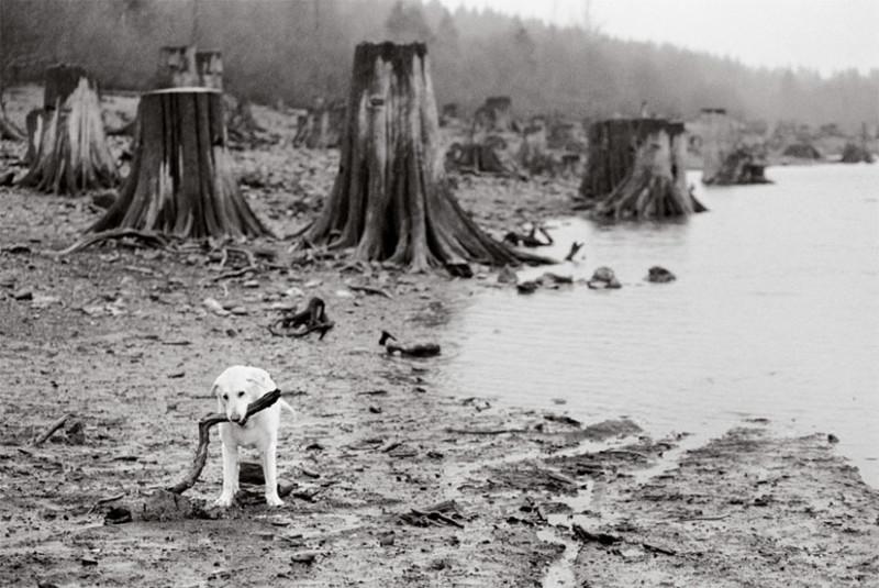 Хэнк (13 лет) собаки, фото собак, фотографии животных