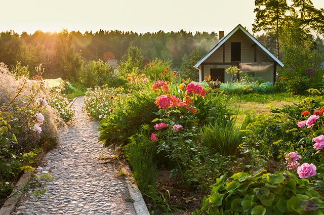 И красота и польза! Какие цветы уберегут ваши грядки от вредителей