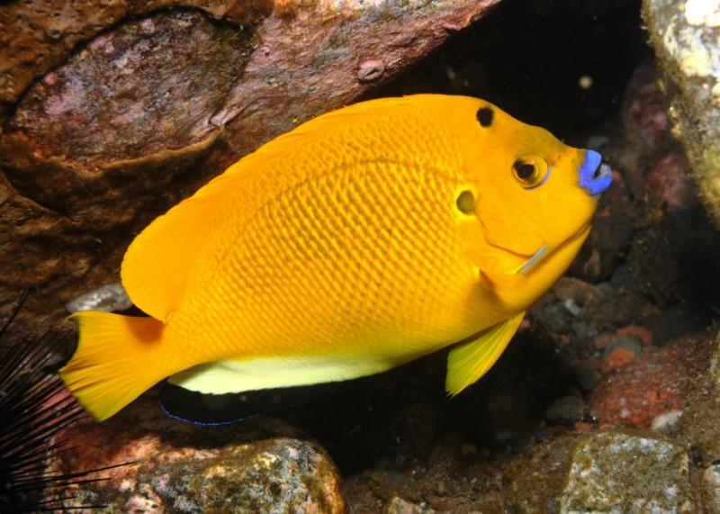 Рыбы-ангелы и рыбы - черти
