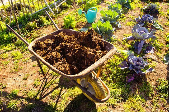 Улучшители почвы. Что добавить в землю перед зимой?