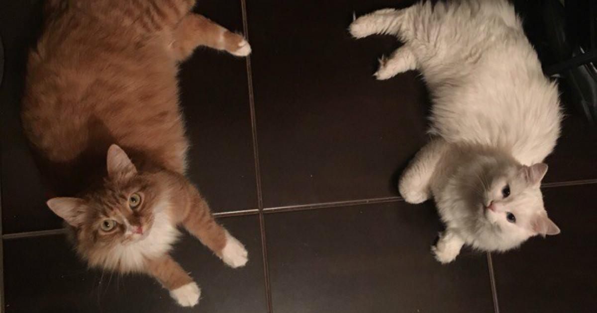 Уличные и ненужные коты попали в Сказку… Шелдон и Белоснежка не верят, что они Дома и еда больше не кончится
