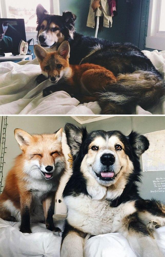 О животных с любовью. Друзья взрослеют вместе