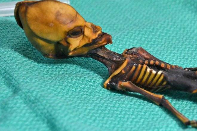 Пришелец из пустыни Атакама: что на самом деле скрывает таинственная мумия
