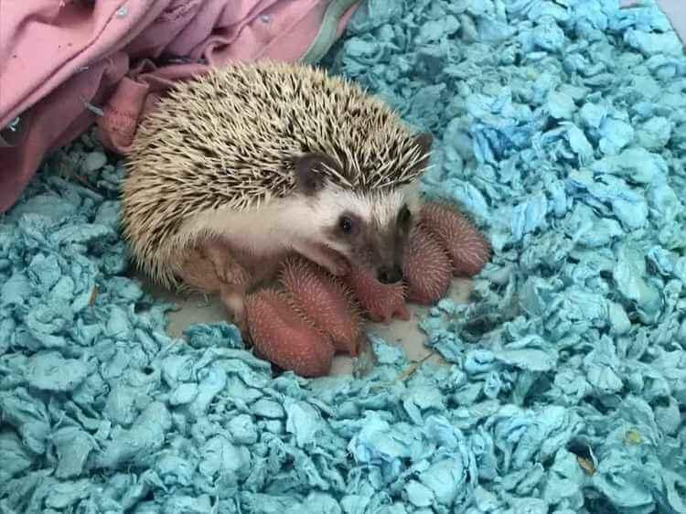 Самые милые снимки животных. Чистый позитив!