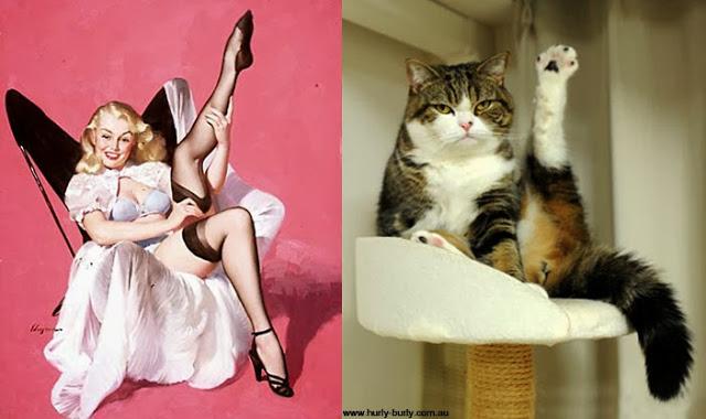 Эти кошки как девушки в стиле пин ап