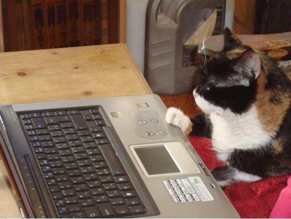 Компьютерные коты.Позитив в выходной.