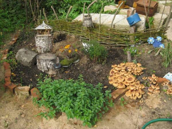 Опята на даче Растения