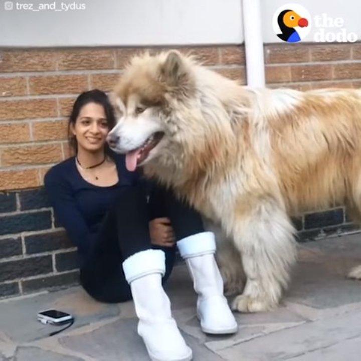 Эта собака выросла в настоящего гиганта, но в душе еще щенок