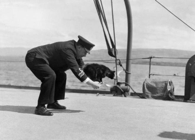 Лучшие друзья моряков животные, коты, факты