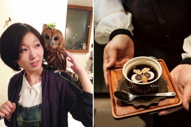 Время сов: нестандартное кафе, набирающие популярность в Японии