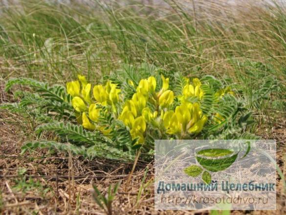 17 растений для снижения дав…