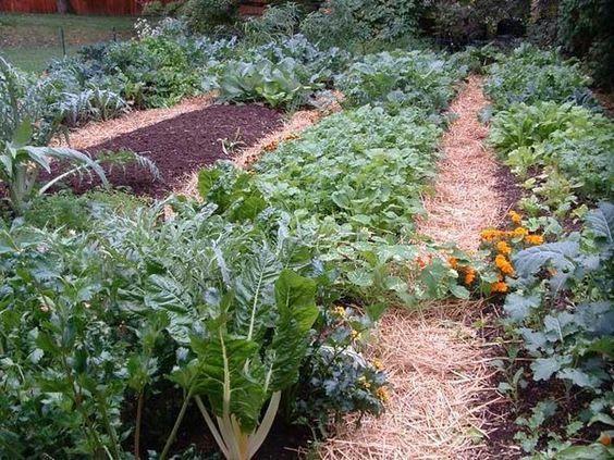 5 способов сделать почву мягкой и плодородной