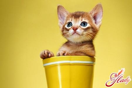 КОШКИН ДОМ. Как правильно кормить кошку?
