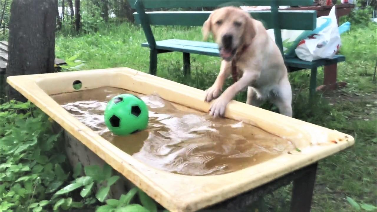 Смешные и Милые Собаки 2018 …