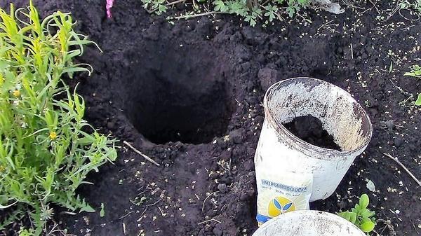 Посадочная яма