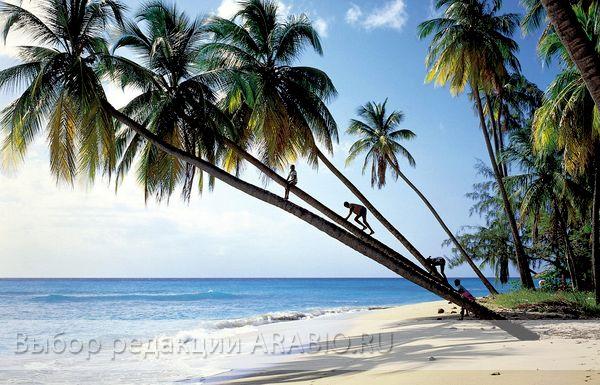 Остров Барбадос - для души и тела