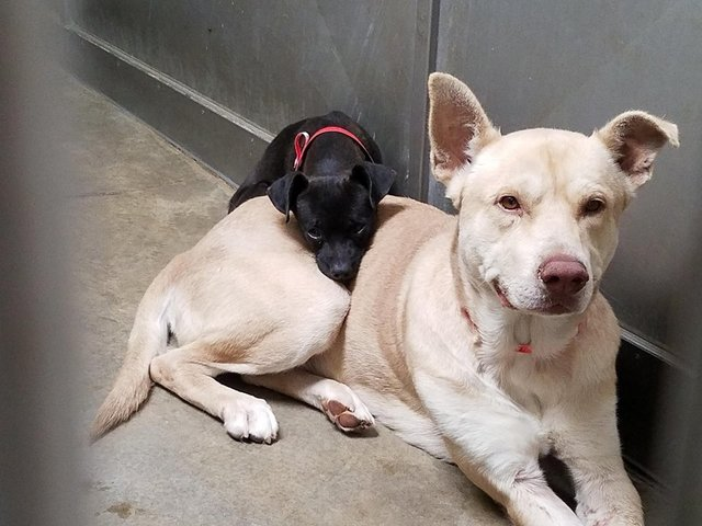 Фотография, где две приютские собаки ждут усыпления, спасла им жизнь