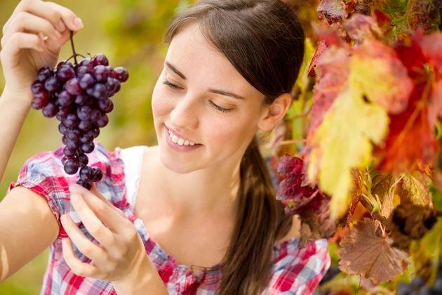 Виноград-целитель