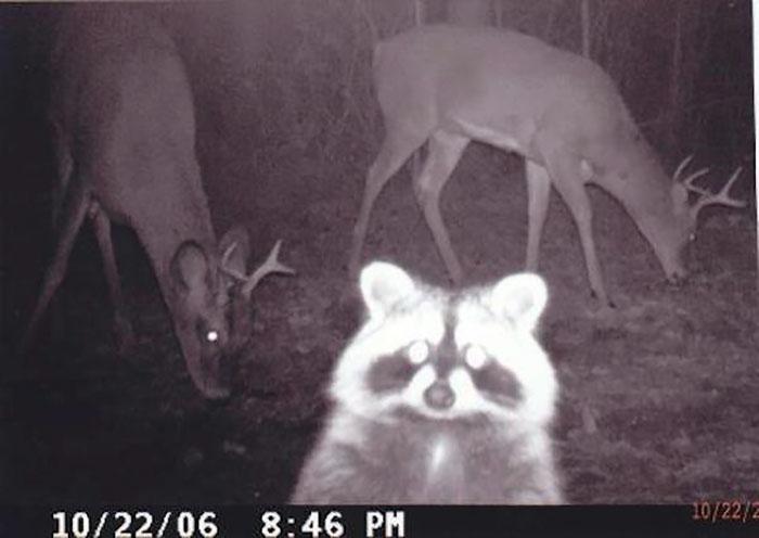 Идеальные фото на тему - что дикие животные делают по ночам?