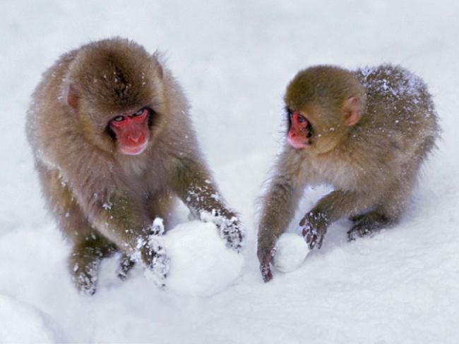 30 фактов о животных, которые поднимут вам настроение