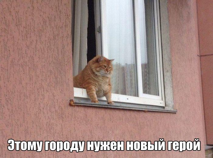 Подборка прикольных фото №1360 (104 фото)