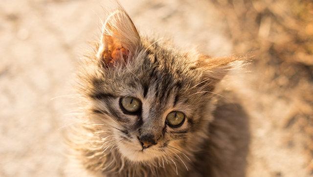 В соцсетях требуют наказать девушку, бросившую котенка в стену